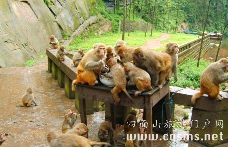 重庆动物园猕猴图片
